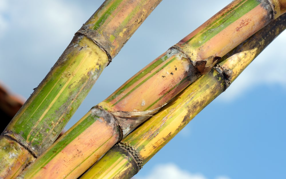 Conceitos sobre nutrição de plantas (micronutrientes)