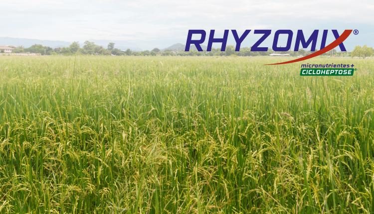 RHYZOMIX CANA